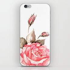 Watercolor rose iPhone & iPod Skin