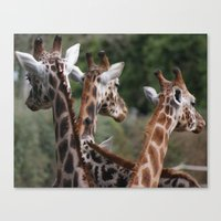 Lovely Ladies Canvas Print