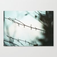 Fragile in the cold Canvas Print