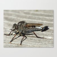 robber fly 2016 Canvas Print