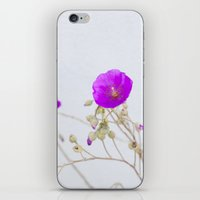 Purple Flower iPhone & iPod Skin
