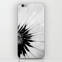dandelion iPhone & iPod Skin