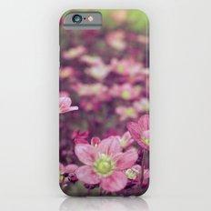 Pink Saxifrage iPhone 6 Slim Case