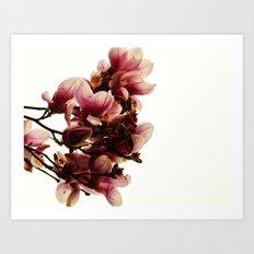 Dewy Blooms-2015 Art Print