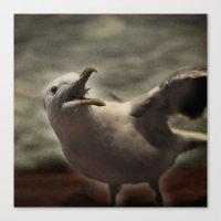 Tom Feiler Seagull Canvas Print