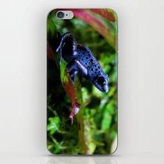 Blue Poison Dart Frog iPhone & iPod Skin