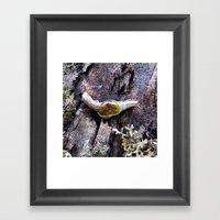 Rainforest No.1 Framed Art Print