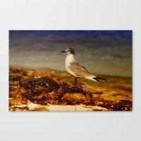 Seagull At The Keys Canvas Print