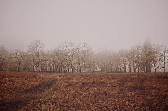 Foggy Trail to the Trees Art Print