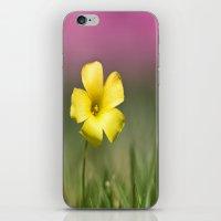Yellow on Pink iPhone & iPod Skin