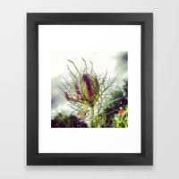 Love In A Mist Pod Framed Art Print