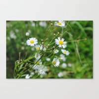 petits fleurs Canvas Print
