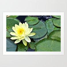 Yellow Lotus - Botanical… Art Print