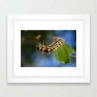 Yellownecked Caterpillar  Framed Art Print