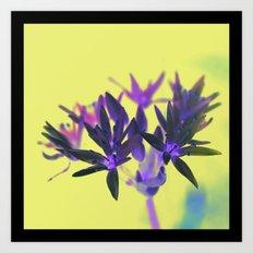 Wild Garlic  Art Print