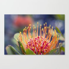 Tropical Sunburst - Leucospermum Pincushion Protea Flower  Canvas Print