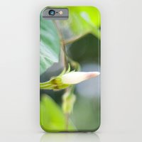 iPhone & iPod Case featuring Morning Softness by Katie Kirkland Photography
