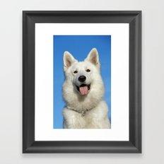 Swiss Shepherd Dog Framed Art Print