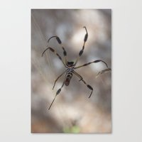 Spider 1 | Picture A Canvas Print