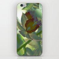 Greengage iPhone & iPod Skin