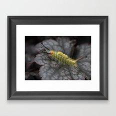 White Marked Tussock Caterpillar Framed Art Print