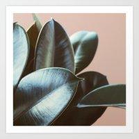 Ficus Elastica #2 Art Print