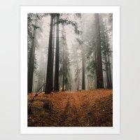 Forest I Art Print