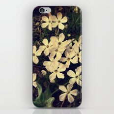 Phlox iPhone & iPod Skin