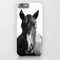 horse iPhone & iPod Cases featuring Horse by Amy Hamilton