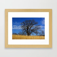 Prairie savanna oak Framed Art Print
