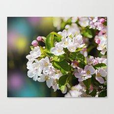 Gorgeous Apple Blossoms Canvas Print