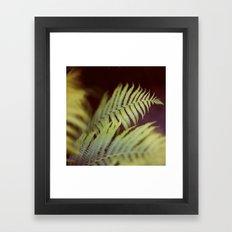 Fern 2 Framed Art Print