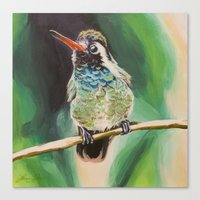 White-Eared Hummingbird Canvas Print