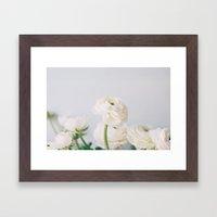 Soft White Ranunculus Framed Art Print