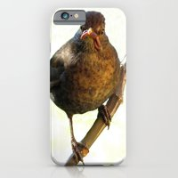 iPhone & iPod Case featuring Female Blackbird (Turdus merula) by Neville Hawkins