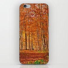 Autumn in the forest iPhone & iPod Skin