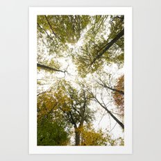 Top Of The Trees Art Print