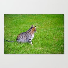 Orange and Tiger Cat Canvas Print