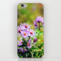 Purple Aster iPhone & iPod Skin