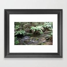 Stream inside the Otway Ranges  Framed Art Print