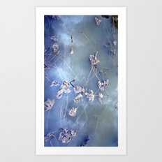 winter lotus Art Print