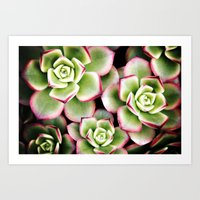 Taffy Succulents Art Print