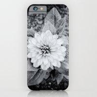 Zinnia iPhone 6 Slim Case