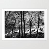 Creek Through The Trees Art Print