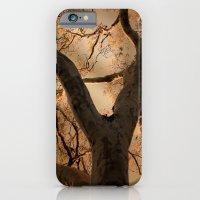 Big Tree, Late Afternoon iPhone 6 Slim Case