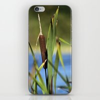 Bulrush iPhone & iPod Skin