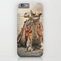 Camel At Giza iPhone 6 Slim Case
