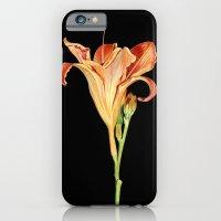 Orange Daylily Illustration iPhone 6 Slim Case