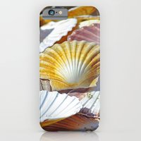iPhone & iPod Case featuring Shells by jacqi