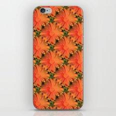 Orange Daisy iPhone & iPod Skin